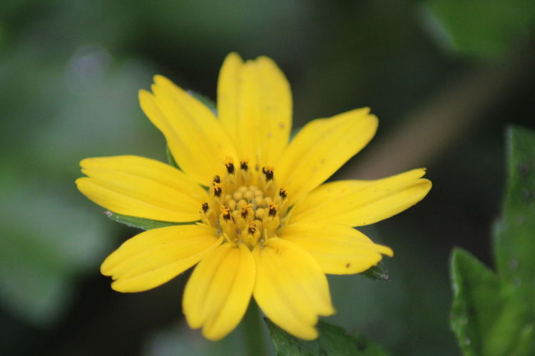 Close-up of yellow flower growing in park