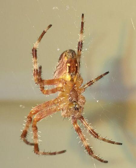 Schöne Spinne First Eyeem Photo