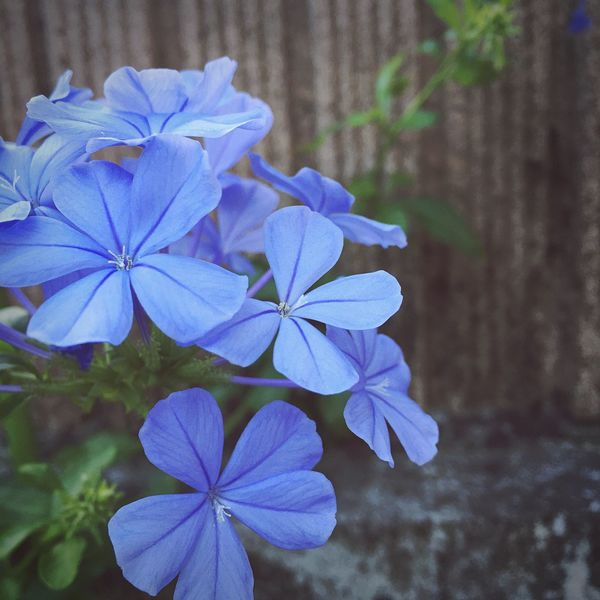 Flower First Eyeem Photo Cute