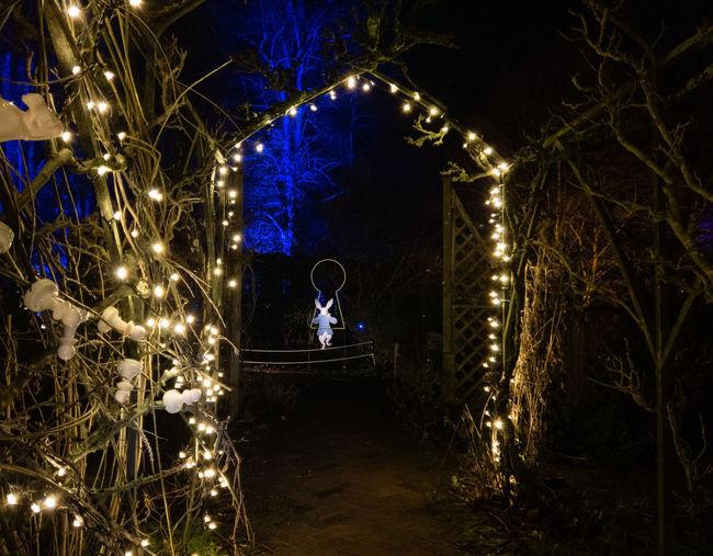 Night Illuminated Tree Christmas Lights Arch Rabbit Keyhole Alice In Wonderland Spectacle Of Light Sudeley Castle