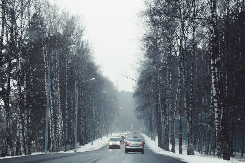Cold Temperature Snow Winter Tree Car Transportation Weather Road Land Vehicle The Way Forward Nature Bare Tree Day Mode Of Transport No People Beauty In Nature Outdoors Scenics Clear Sky Winter Road Birch Tree Wintertime Snowing Winterscapes Shades Of Winter