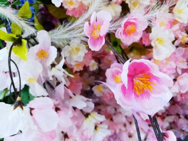 Pink Flower Pink Flower Blossom Pink Flowers In Bloom Flower Pink Color Fragility Petal Flower Head Nature Beauty In Nature Multi Colored Freshness Growth Plant Close-up Day No People