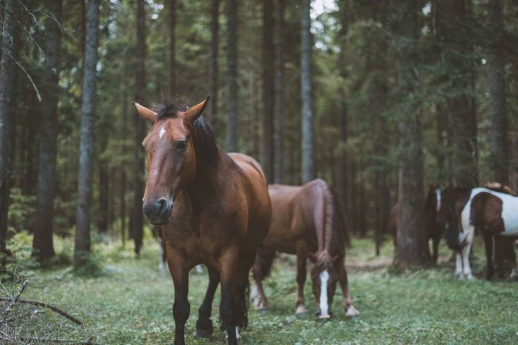 Animal Animals Domestic Animals Forest Green Horse Horses Tree