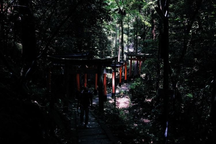 Torii Gate Architecture Building Built Structure Dark Direction Footpath Forest Growth Land Nature No People Outdoors Plant Spooky The Way Forward Tranquility Tree Tree Trunk Trunk WoodLand