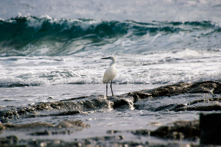 White bird perching on rock at beach