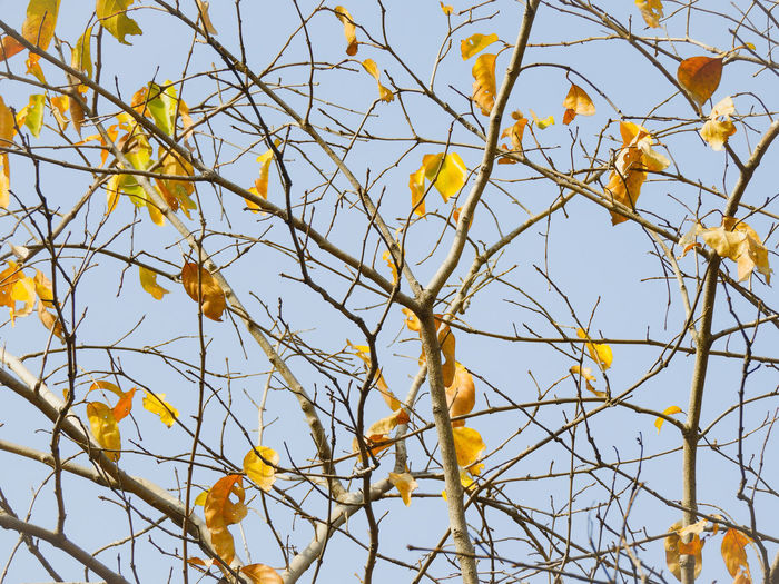 Spring Branch Leaf Yellow Full Frame Backgrounds Sky Close-up Plant Fall Change Leaves Autumn Autumn Collection Dry Season  Leaf Vein Fallen Leaf Wilted Plant Plant Part Fallen