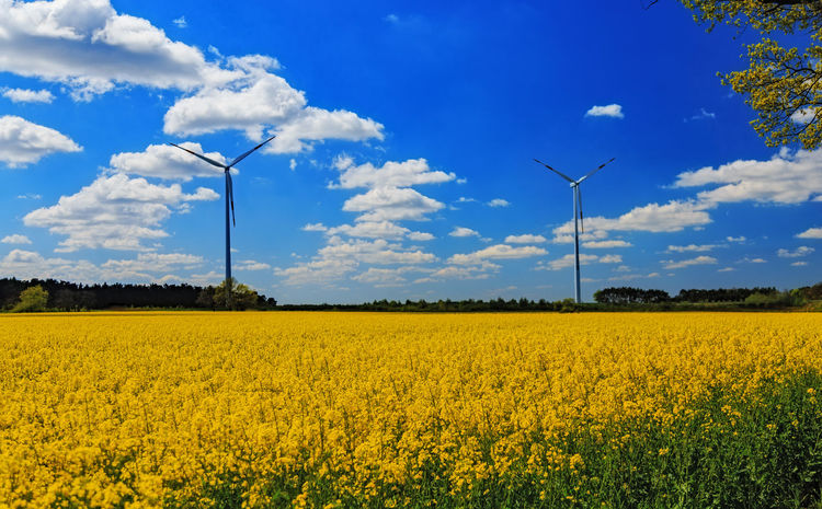 Agriculture Beauty In Nature Cloud - Sky Cultivated Land Field Horizon Over Land Landscape Nature Oilseed Rape Plant Windcraft Yellow
