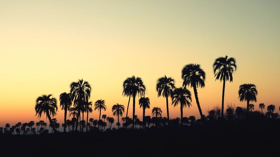 Argentina Nikon Zoom Close-up Country Beauty In Nature Wild Nature Palm Grove Daylight Sunset Tree Palm Tree Sunset Silhouette Black Color Sky Plant Life Countryside Growing EyeEmNewHere