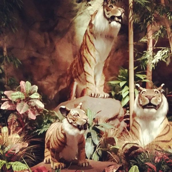 Having dinner with the tigers! Rainforestcafe Greatlakescrossing Roar