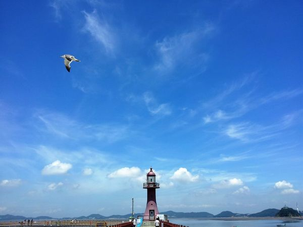 Beauty In Nature Bird Cloud - Sky Day Finding New Frontiers Fly Flying High Island Jebudo Korea Lighthouse Nature Outdoors People Scenics Sea Seagull Sky Water Art Is Everywhere The Great Outdoors - 2017 EyeEm Awards BYOPaper! Live For The Story
