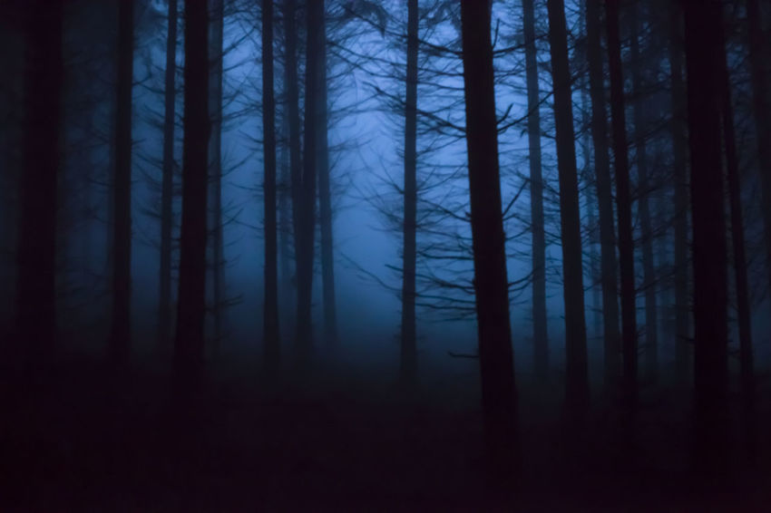 Novembre Forest Abundance Atmosphere Bare Tree Beauty In Nature Blue Fog Dark Fog Foggy Forbidden Forest Forest Growth Mystic World Of Nature Mystical Atmosphere Nature Non-urban Scene November Outdoors Scenics Silence Silhouette Tranquil Scene Tranquility Tree Trunk Wilderness WoodLand