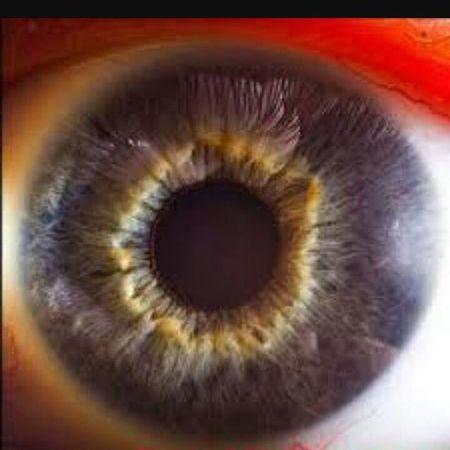 تصویر چشم انسان از نزدیک