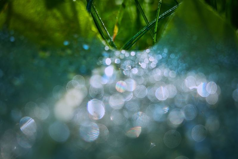 Leaf Dew Drops Dew Drop Close-up Wet Water Plant Nature Fragility No People Selective Focus Green Color Tree Vulnerability  Outdoors Focus On Foreground Dew Beauty In Nature Rain Decoration RainDrop Day