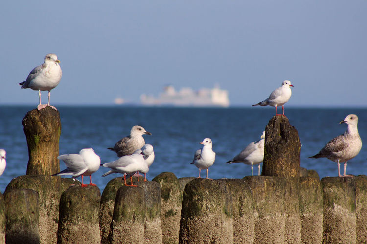 Seagulls perching by sea