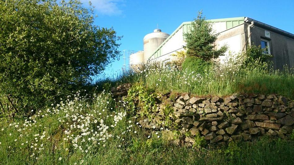Plaudren Farmer's Life Agriculture Flower Landscape Fleurs Paysage