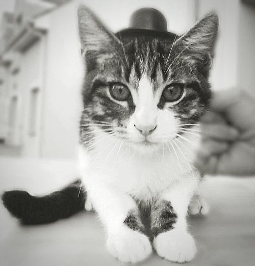 That is my cutie cat ~ Cat Cute Blackandwhite Pets