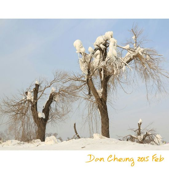 Snow Snow Covered Trees Hello World Snapshots Of Life Snapshot Harbin Cheese! Portraits Travel Photography Traveling Dancheung Showcase July