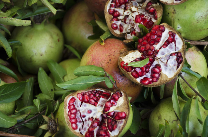 Fruta♥ Green Color Close-up Day Food Food And Drink Freshness Fruit Frutas Tropicales Green Color Healthy Eating No People Outdoors Pomegranate Pomegranate Seed Red Color