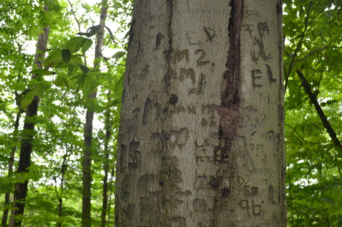 Carved In Wood Close-up Day Forest Green Color Growth Names Carved Into Tree Nature No People Outdoors Panama Rocks,NY Tree Tree Trunk