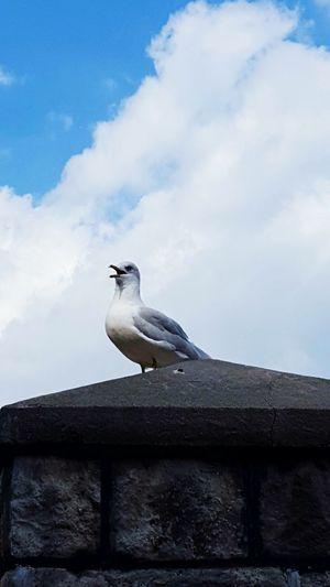Bird Animal Wildlife Seagulls In The Park seagull Nature