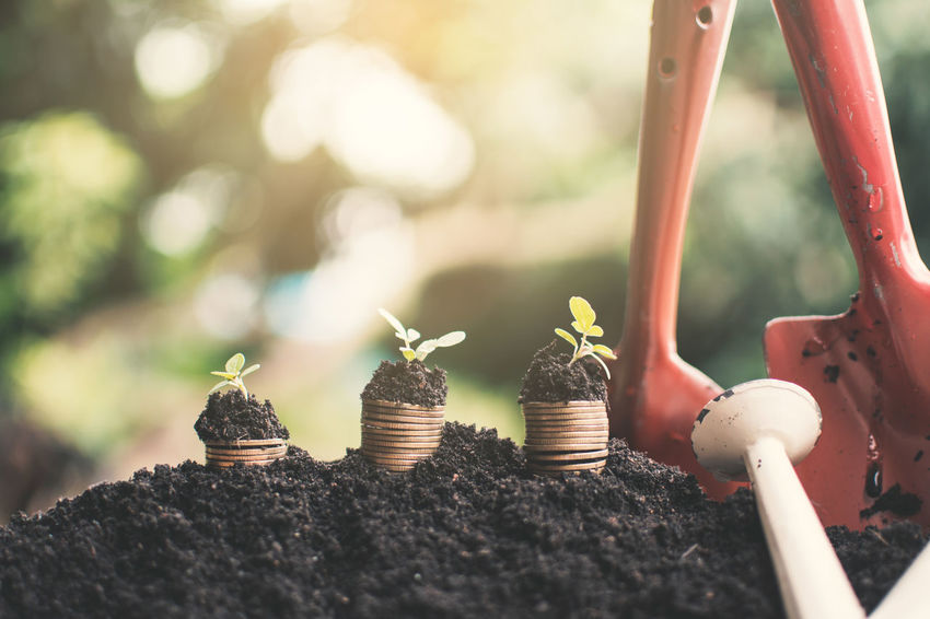 Beginnings Bussiness Coins Day Freshness Growth Nature New Life Plant Seedling