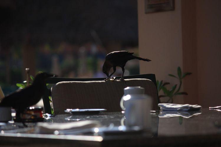 Ravens Perching At Outdoor Restaurant