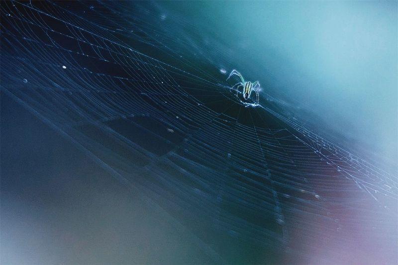Blue spider Nature Spider Web Wildlife & Nature