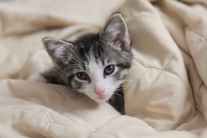Jedi the kitten. <3 Adorable Cat Cat Face Claws Cuddling Cute Cutest Cats Cutest Kittens Cutest Pets Domestic Animals Follow Me Kitten Kitty Nose Best Of EyeEm Kitty Whiskers Nap Time Night Night, Sleep Tight Paws Pets Sleeping Sleepy Sleepy Cat Sleepy Kitten Showcase June Whiskers