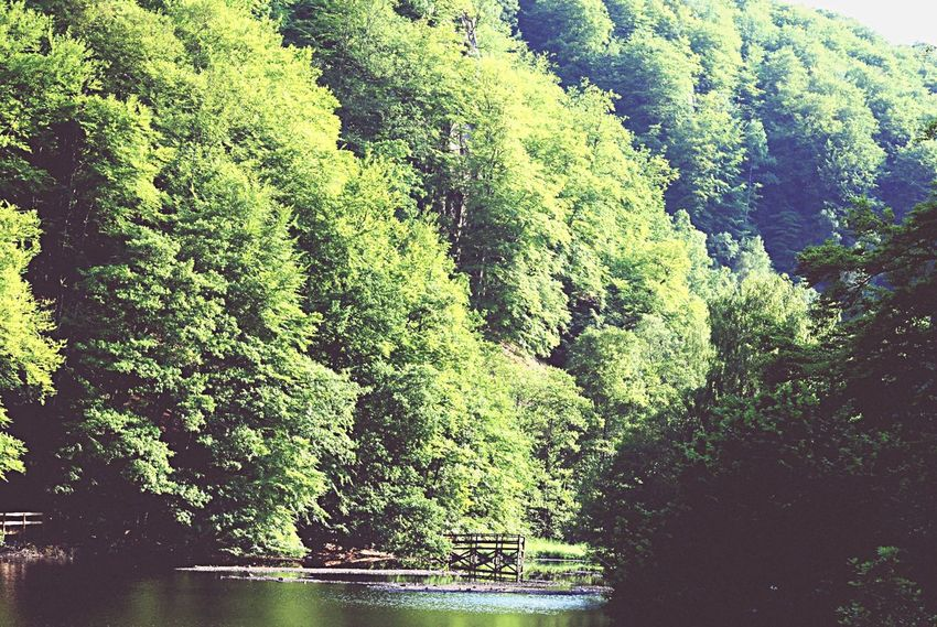 Trees Green Lake