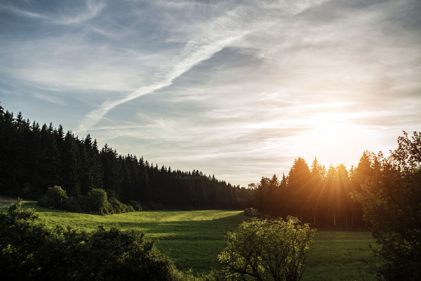 EyeEmBeauty In Nature Forest Landscape Nature Outdoors Pine Tree Scenics Sky Sunlight tranQuil Scene EyEmNewHere EyeEmNewHere EyeEmNewHere