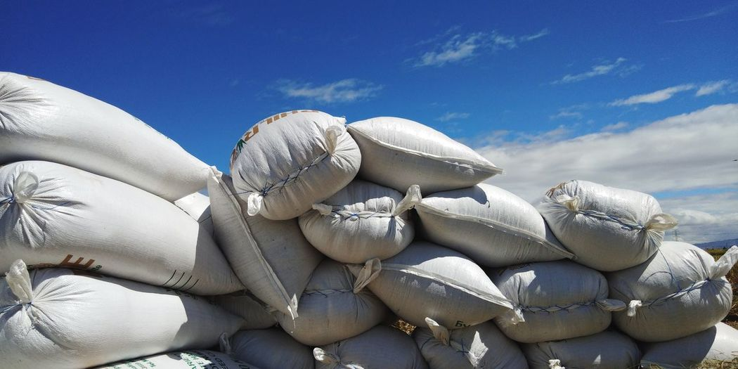 a bountiful harvest!😁🌾 EyeemPhilippines EyeEmNewHere Farmer Farming PhonePhotography Rice - Food Staple EyeEm Selects Blue Stack Sky Close-up Cloud - Sky Landscape