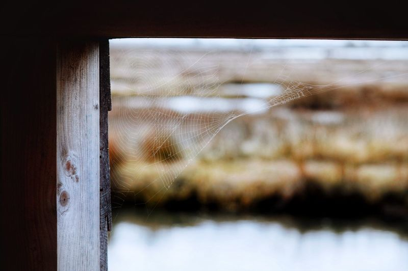House 🕸 Animal Themes Life Calm Nikon Wildlife & Nature Nature Photography Spider Web Window Glass - Material Transparent No People Water Indoors  Nature Close-up Architecture Built Structure Building Drop A New Perspective On Life