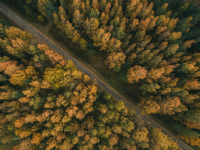 High angle view of trees on road