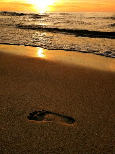 Water Sea Sunset Beach Sand Low Tide Sunlight Sky Close-up Horizon Over Water FootPrint Wave Paw Print Surf