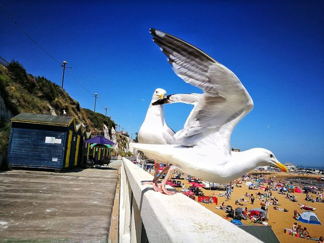 Sky Motion Blue Outdoors Clear Sky Adults Only Day Nature SEAGULL IN FLIGHT Seagulls And Sea Seagulls Broadstairs Kent England