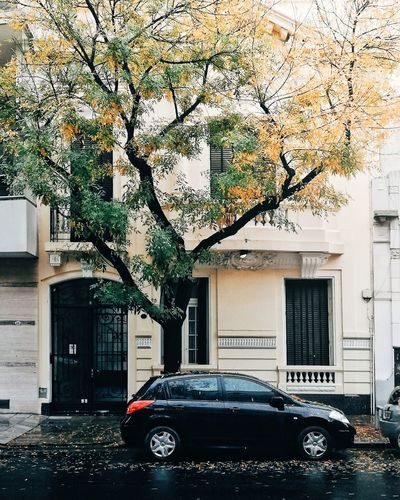 Lluvia Colonial Buenos Aires Argentina Tree Land Vehicle Car Stationary Exterior Building Historic Rainy Season Rainfall Rain