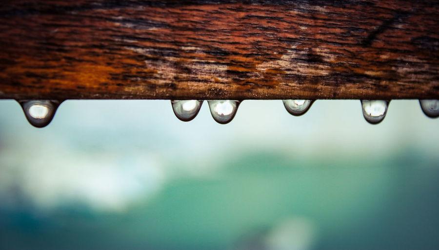 Drops on Wood