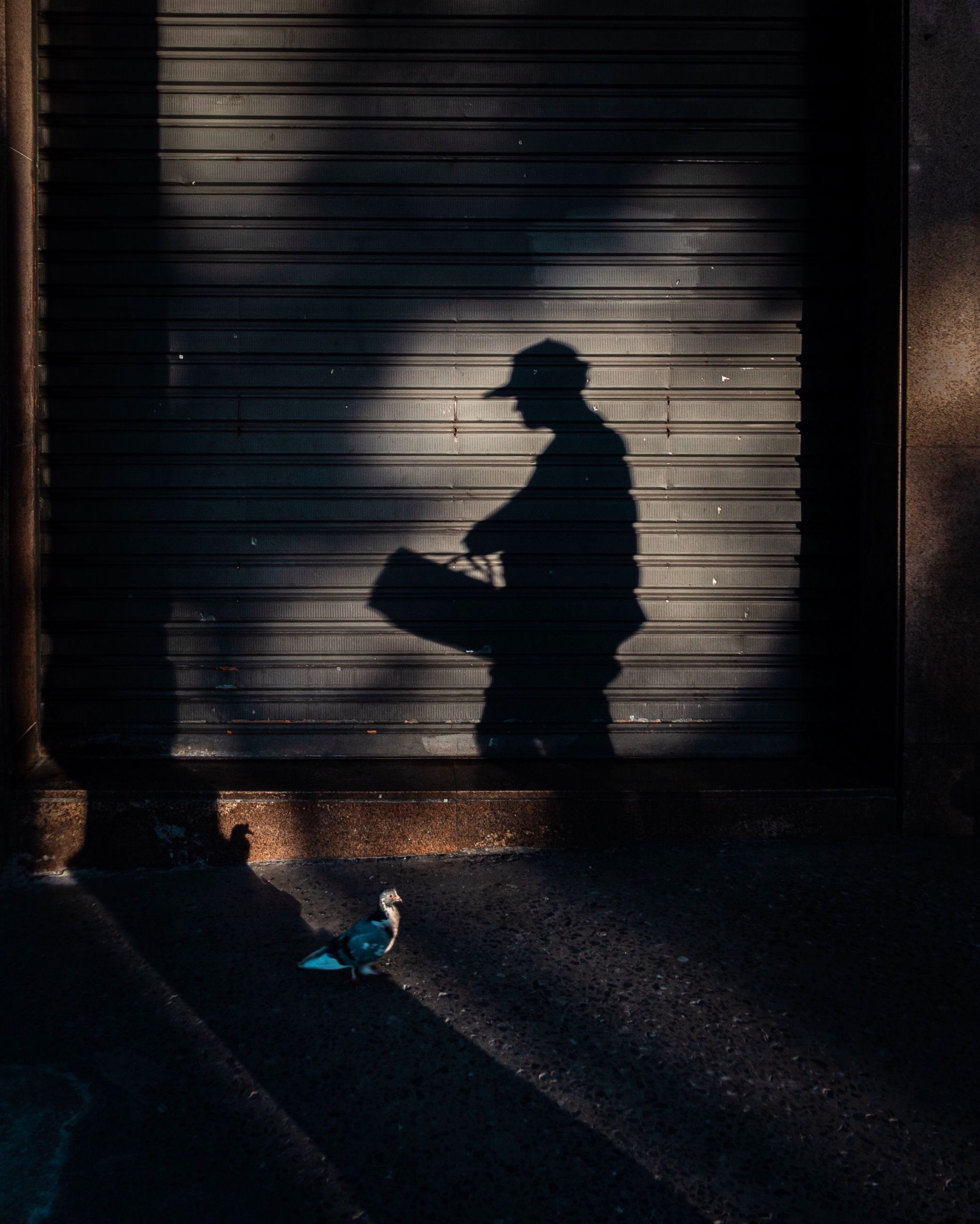 real people, shadow, sunlight, one person, men, full length, city, lifestyles, silhouette, leisure activity, architecture, footpath, shutter, nature, walking, street, outdoors, focus on shadow