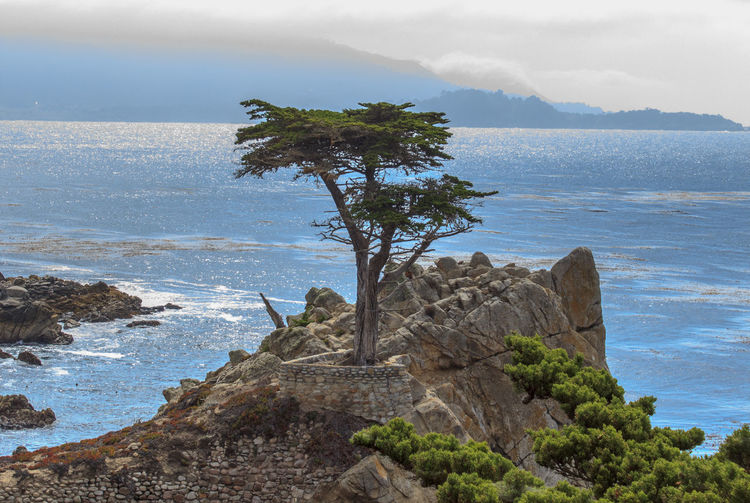 Landscape of California coast with lone tree on rocky outcrop Beach Beauty In Nature California Cliff Day Horizon Over Water Nature No People Outdoors Pacific Pacific Coast Highway Pacific Ocean PCH Rock - Object Scenics Sea Sky Tranquil Scene Tranquility Tree Water