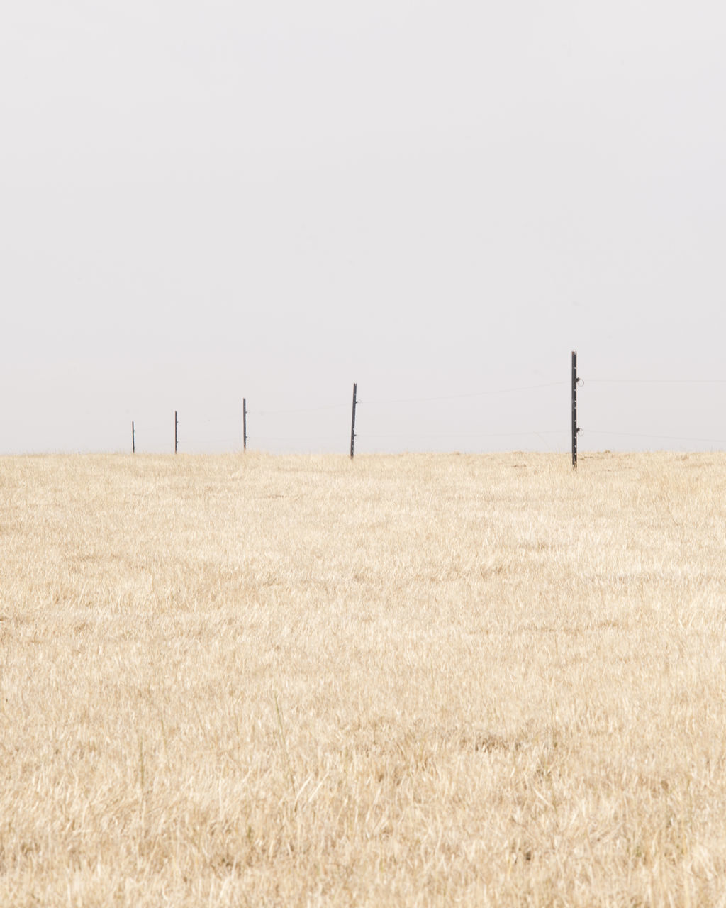copy space, clear sky, field, landscape, tranquil scene, tranquility, rural scene, agriculture, horizon over land, nature, scenics, beauty in nature, farm, no people, day, outdoors, remote, growth, crop, dry