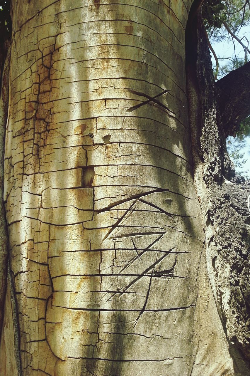 tree, tree trunk, trunk, plant, day, no people, pattern, textured, close-up, nature, outdoors, old, built structure, branch, architecture, growth, rough, bark, low angle view, sunlight