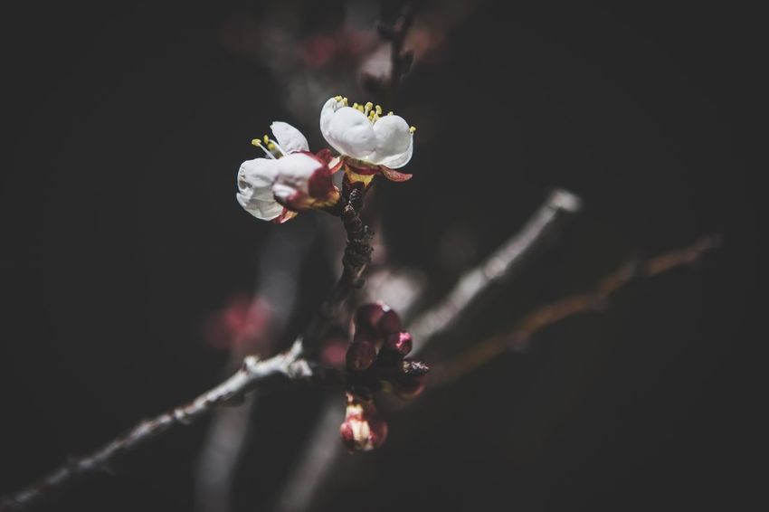 EyeEm Gallery Springtime Blooming Flower Blooming EyeEm Nature Lover Getting Inspired EyeEm EyeEm Best Shots Flower Fragility Nature Beauty In Nature Growth Close-up Plant Focus On Foreground Outdoors No People Flower Head Freshness Day