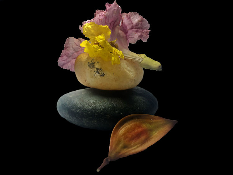Black Background Close-up Flower Flower Head Food Freshness Fruit No People Studio Shot Yellow