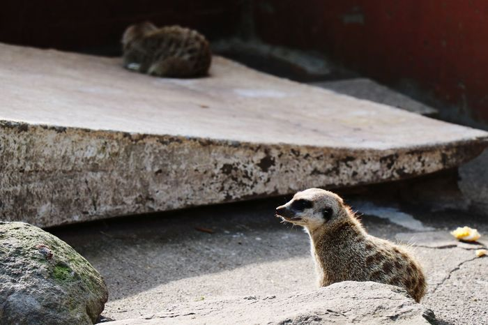 animal Kingdom Animal Mercat EyeEm Selects Bird Meerkat Sea Life Full Length Close-up Zoo Animals In Captivity EyeEmNewHere