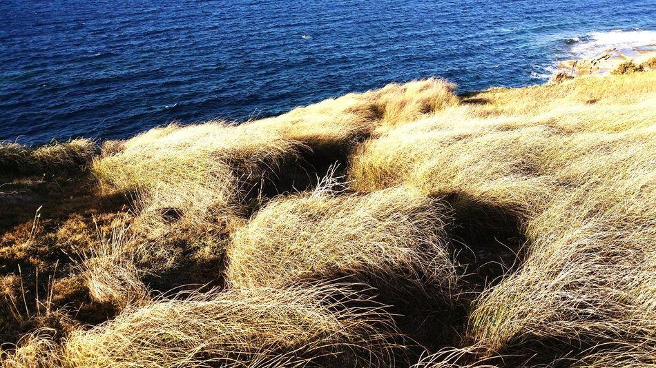 Drygrass Malta Mellieha