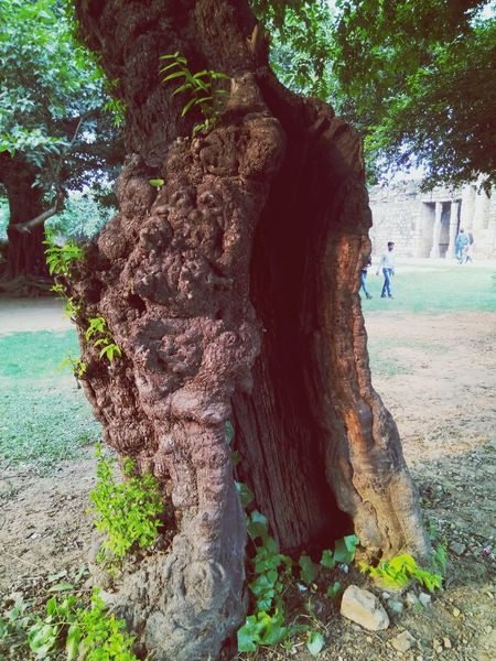 Tree Lifestyles Real People Outdoors Day Men Cultures Nature Togetherness Mammal No People Instamood Instaphoto Vijendrapaliwalphotography MyStyle👌 Creativity Myclick💚 History Place Of Worship EyeEm Best Shots - Black + White Instadaily Visiting