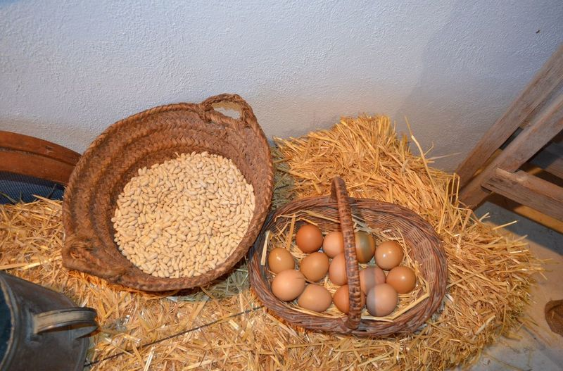 High Angle View Of Eggs And Seeds In Baskets At Miro Museum