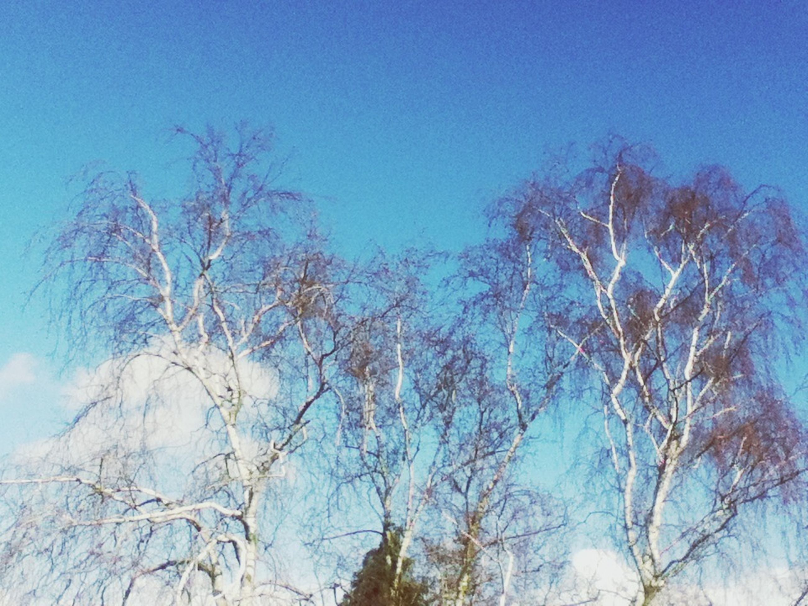 low angle view, blue, tree, bare tree, clear sky, branch, nature, beauty in nature, tranquility, growth, sky, outdoors, scenics, high section, copy space, day, no people, tranquil scene, sunlight, treetop
