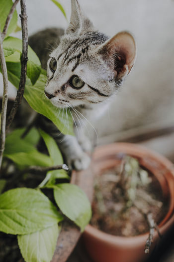 Close-up of cat on potted plant