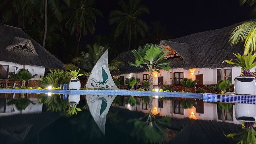 Palm trees by swimming pool at night
